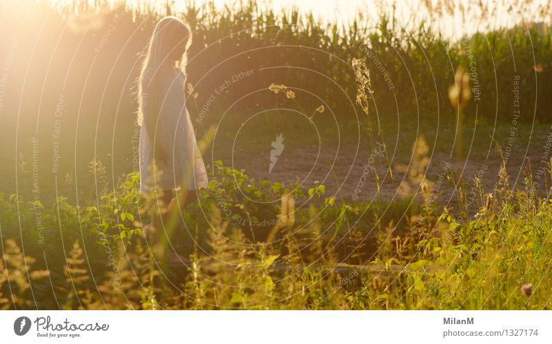 Human being Child Nature Plant Beautiful Summer Relaxation Girl Warmth Life Natural Happy Glittering Field Infancy Blonde