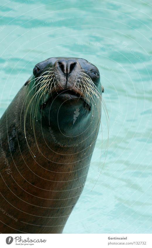 Water Eyes Funny Nose Wet Swimming pool Animal face Pelt Zoo Wild animal Friendliness Turquoise Animalistic Mammal Muzzle Whisker