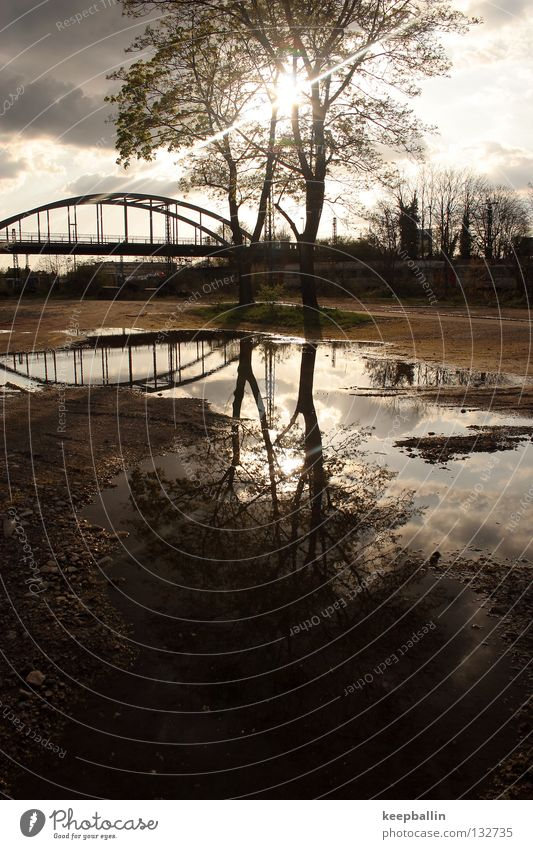 mirroring Tree Reflection Midday Bridge Earth Sand Sun Lighting Water Sky