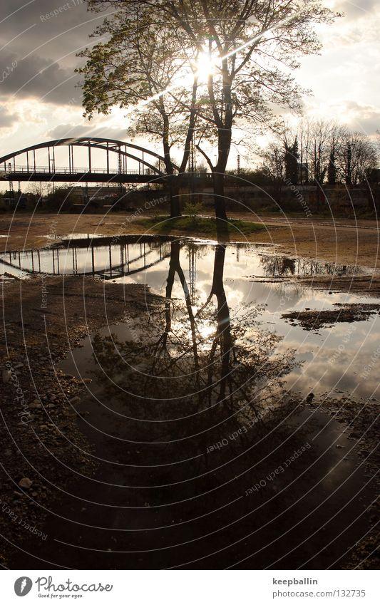 Sky Water Tree Sun Sand Lighting Earth Bridge Midday