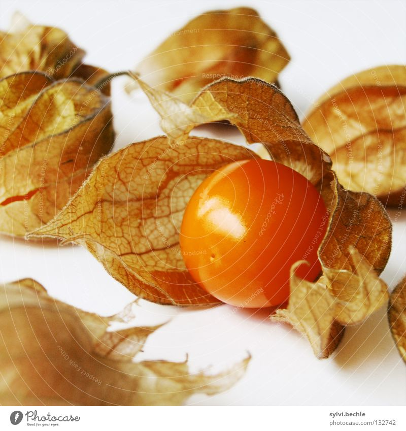 Nature Leaf Nutrition Brown Orange Healthy Food Fruit Fresh Sweet Multiple Round Decoration Delicate Anger Sphere