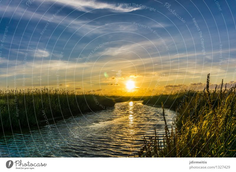 Sky Nature Plant Summer Water Sun Relaxation Landscape Clouds Environment Spring Autumn Grass Coast Weather Bushes