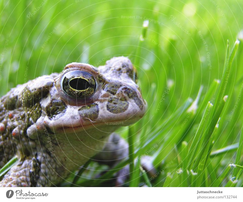 For Froggy64 Grass Tadpole Green Quack Environmental protection Steadfast Sulk Pond Lake Europe Body of water Garden pond Habitat Toad Frog Prince Boredom