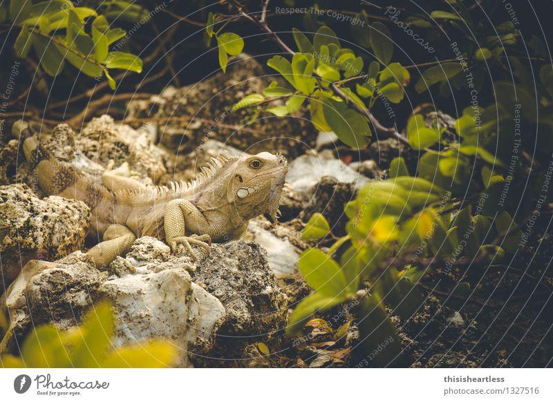 Green Animal Yellow Stone Wild animal Skin Observe Threat Curiosity Near Trust Stupid Thorny Reptiles Arrogant Love of animals