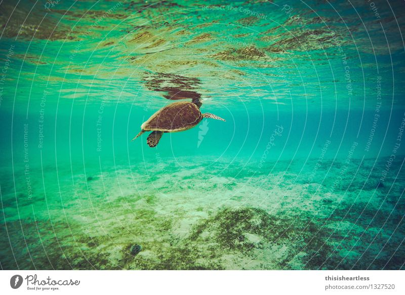 breathe... Aquatics Swimming & Bathing Dive Water Summer Bay Reef Ocean Caribbean Sea Americas Animal Wild animal Turtle Turles Tortoise-shell 1 Breathe Running
