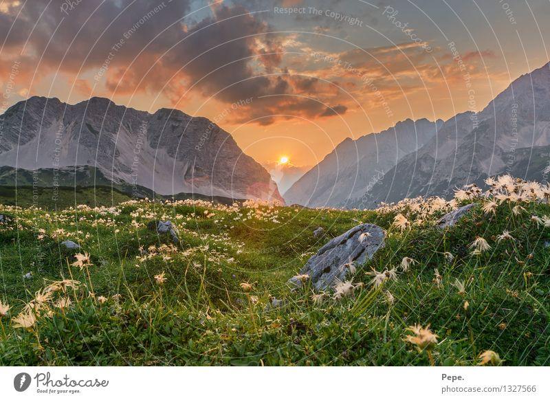 Beauty & Beauty Nature Landscape Plant Animal Sky Sunrise Sunset Sunlight Rock Alps Mountain Peak Happy Contentment Orange Moody Flower Stone Colour photo