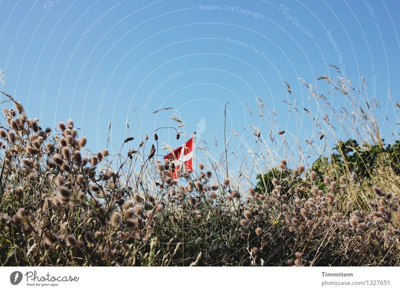 Low flag. Vacation & Travel Environment Nature Plant Sky Beautiful weather Denmark Flag Flagpole Esthetic Simple Natural Blue Green Red Emotions Blade of grass