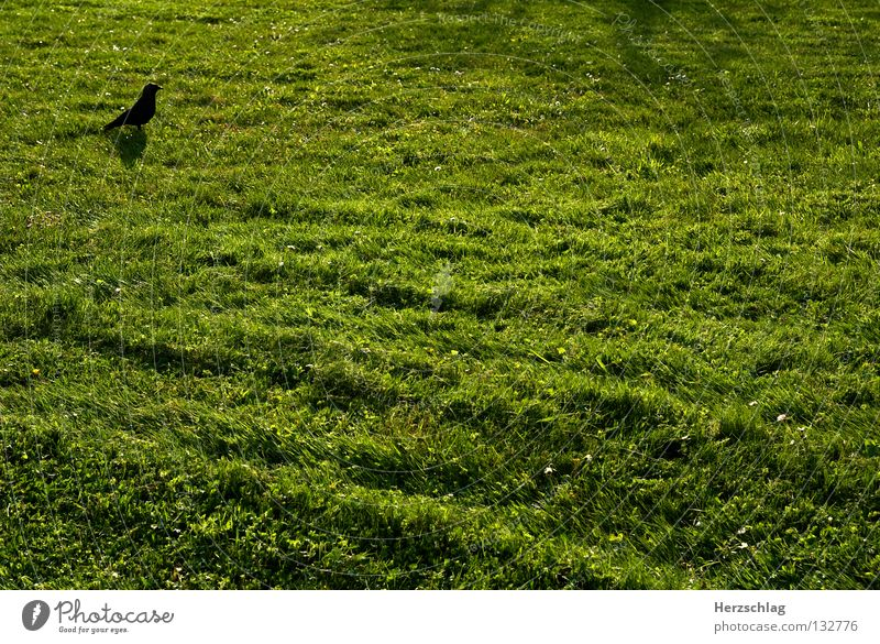 Green Black Meadow Grass Spring Bird Free Earth Fresh Thought Rectangle Minimal Maximum