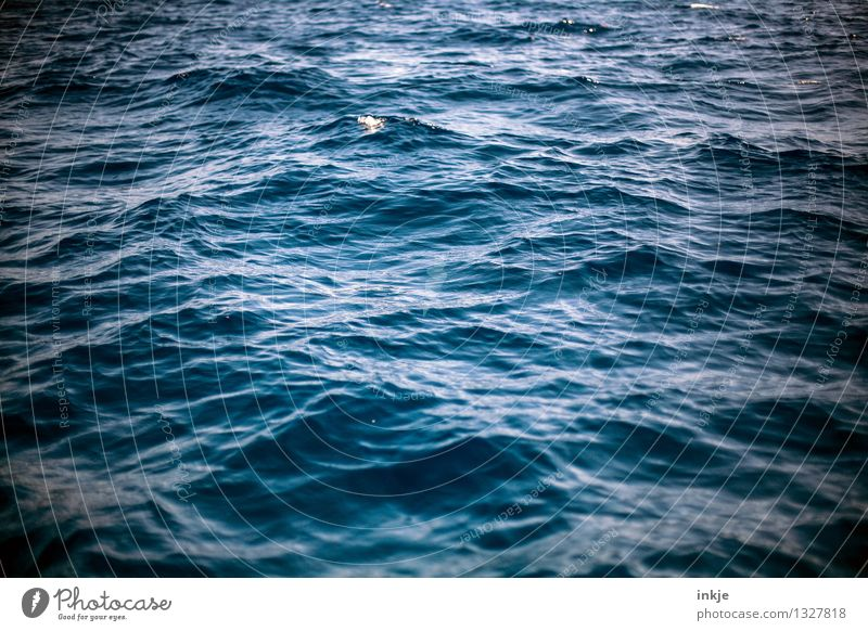 You seek the sea Environment Nature Elements Water Waves Ocean Sea level Surface of water Movement Threat Dark Large Wild Blue Moody Power Pure Deep sea churned