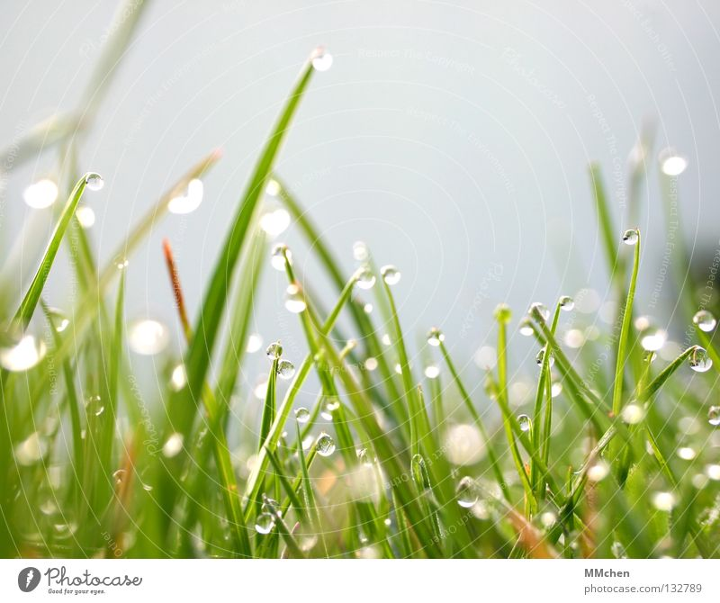 Nature Plant Water Sun Life Spring Meadow Grass Food Drops of water Wet Floor covering Lawn Blade of grass Dew Damp
