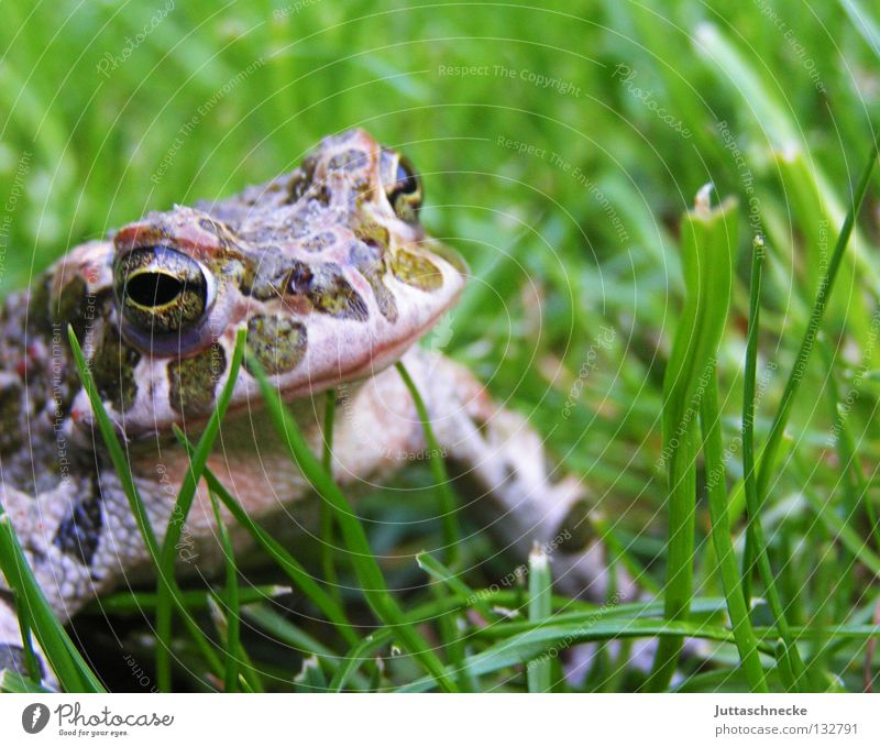Nature Green Eyes Animal Grass Lake Free Europe Sporting event Frog Pond Environmental protection Competition Body of water Amphibian