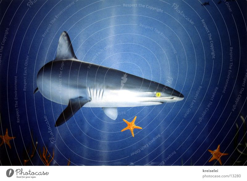 shark attack Shark Mural painting Ocean Transport Water Underwater photo