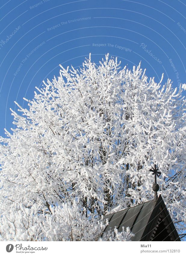 hoarfrost Winter Cold Religion and faith Church Chapel Tree Hoar frost Snow Ice White Blue Crucifix Christian cross House of worship Religion & Faith