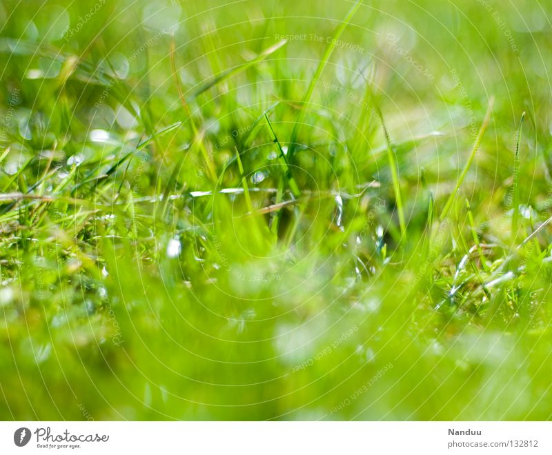 Nature Green Summer Meadow Grass Spring Fresh Growth Blade of grass Depth of field Beautiful weather Juicy Maturing time