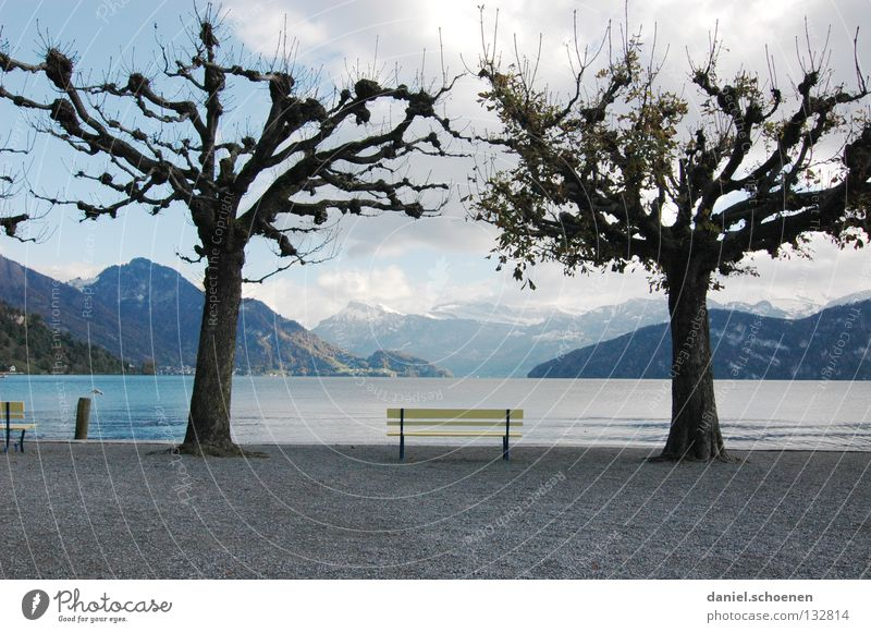 rest Calm Relaxation Tree Loneliness Lake Lakeside Yellow Switzerland Lake Lucerne Spring Autumn Clouds Grief Distress recreation Bright Water Blue Chair Bench