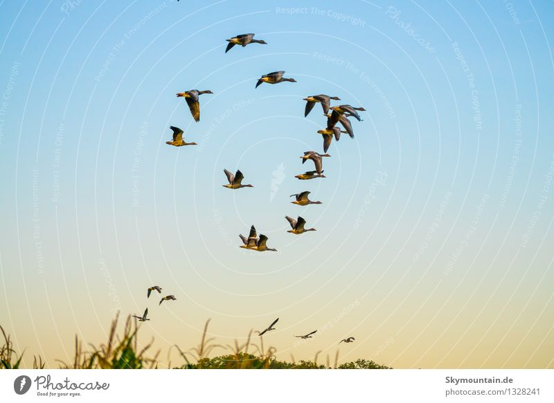 Nature Blue Animal Black Environment Yellow Meadow Natural Happy Flying Brown Bird Horizon Wild Field Gold