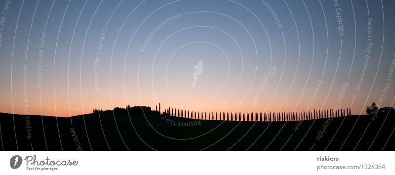 silhouette Environment Sunrise Sunset Summer Tuscany Loneliness Idyll Cypress Avenue Italy Colour photo Exterior shot Pattern Deserted Morning Silhouette