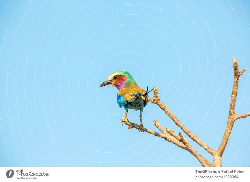 Blue Green White Red Animal Black Yellow Flying Brown Bird Pink Elegant Gold Sit Branch Living thing