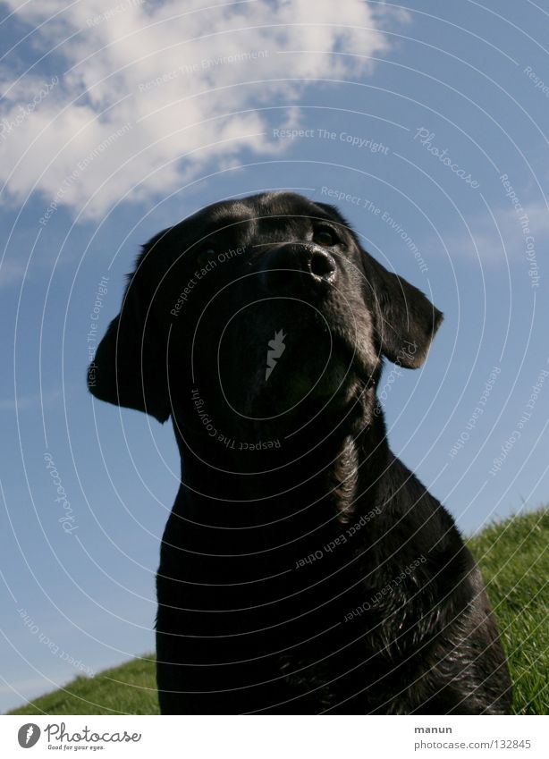 Sky Dog Green Summer Animal Clouds Black Calm Meadow Trust Serene Noble Mammal Endurance Patient Sublime
