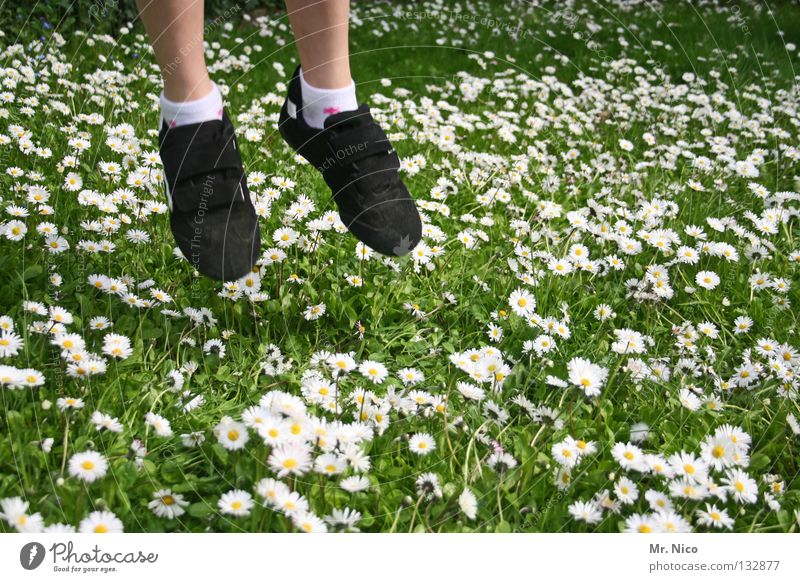 do not step on the carpet of blossoms Jump Hop Aloof Go up Daisy Meadow Grass Blade of grass Flower Hover Glide Caution Attentive Blossom Yellow White Green