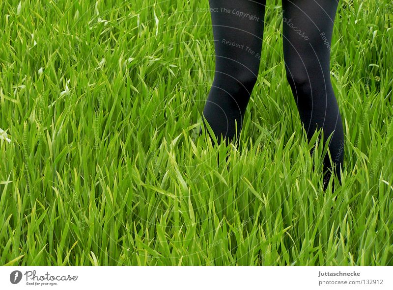 X Green Black Grass Meadow Field Tights Stand Going Knock-kneed Stork Spring Growth Sow Sowing Working in the fields Legs stalk Extend Plantlet Juttas snail
