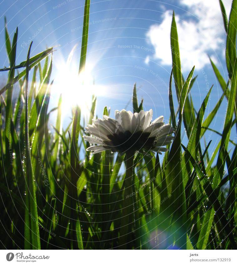 Beautiful Sky Sun Joy Clouds Meadow Grass Spring Happy Warmth Contentment Graffiti Physics Daisy Sunday