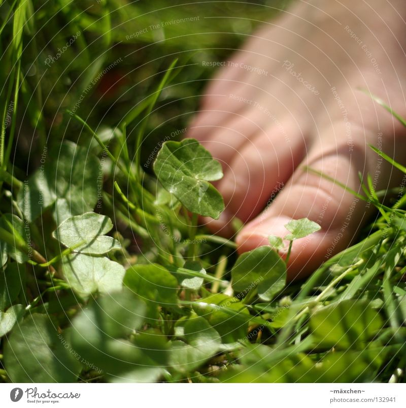 without shoes / without shoes Barefoot Spring Going Healthy Grass Blade of grass Green Clover Cloverleaf Nail Without Footwear Summer Meadow Toes Human being
