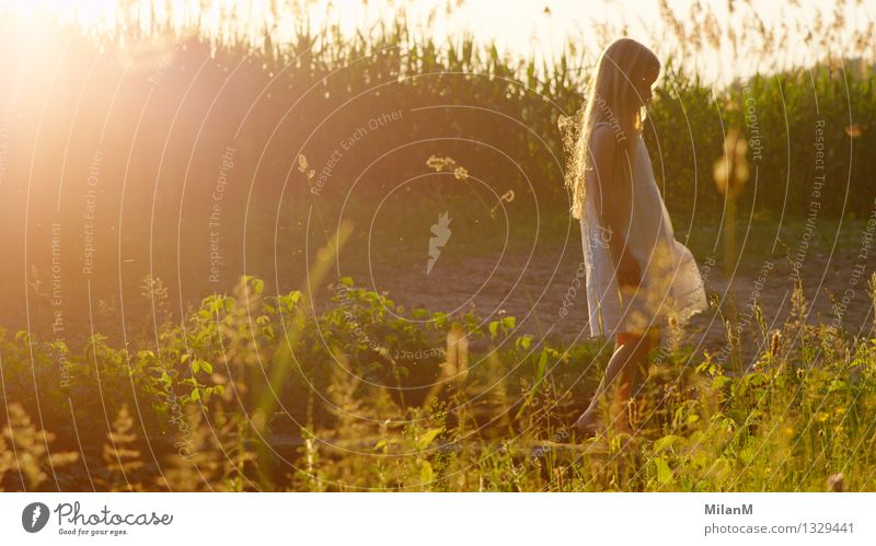 summer light Leisure and hobbies Vacation & Travel Adventure Girl 3 - 8 years Child Infancy Nature Summer Beautiful weather Field Observe Think Walking Blonde
