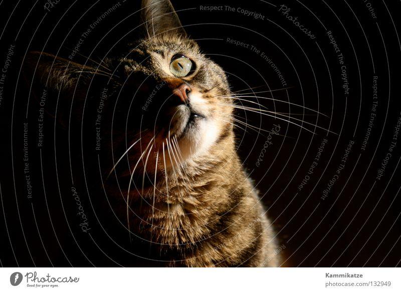 Cat Observe Curiosity Pelt Mammal Domestic cat Snout Land-based carnivore Cat's paw