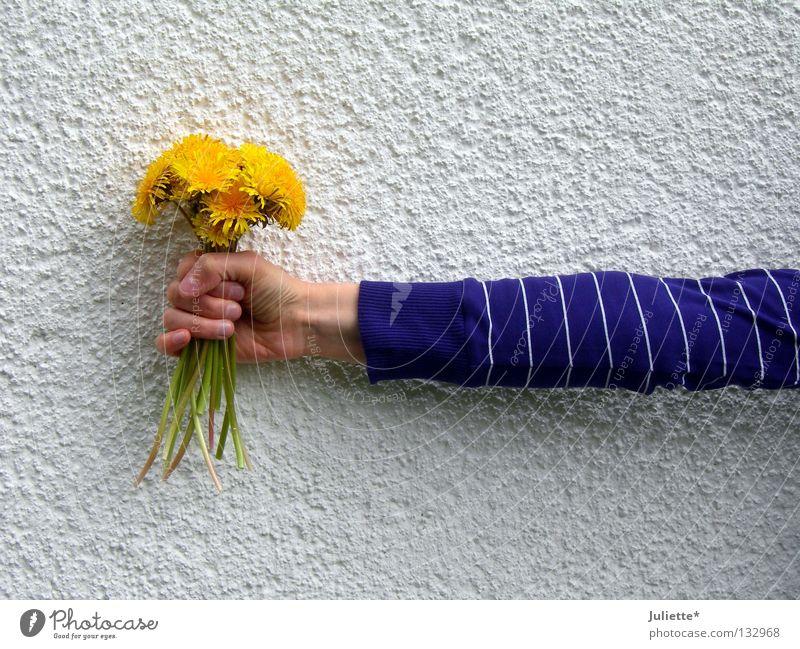 flower holder Flower Wall (building) Violet Stalk Dandelion Hand White Green Stand To hold on Donate Vertical Spring Birthday Arm clench Gleb
