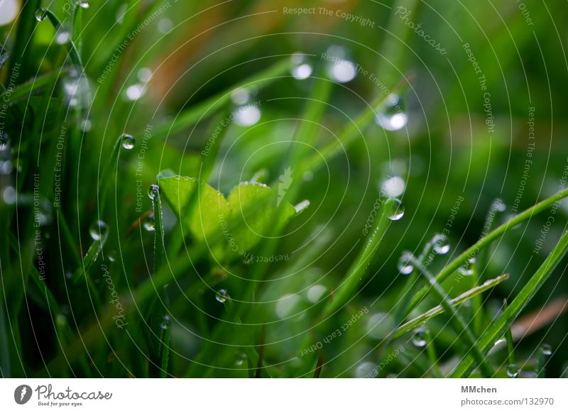 BeadsDrops Morning Dew Meadow Grass Blade of grass Plant Damp Wet Life Wake up Spring Blur Photosynthesis Lawn Nature Drops of water Water elixir of life