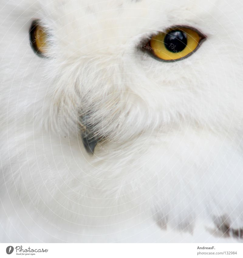 Nature White Winter Animal Eyes Snow Bird Wild animal Feather Clean Pure Zoo Concentrate Hide Mystic Fairy tale