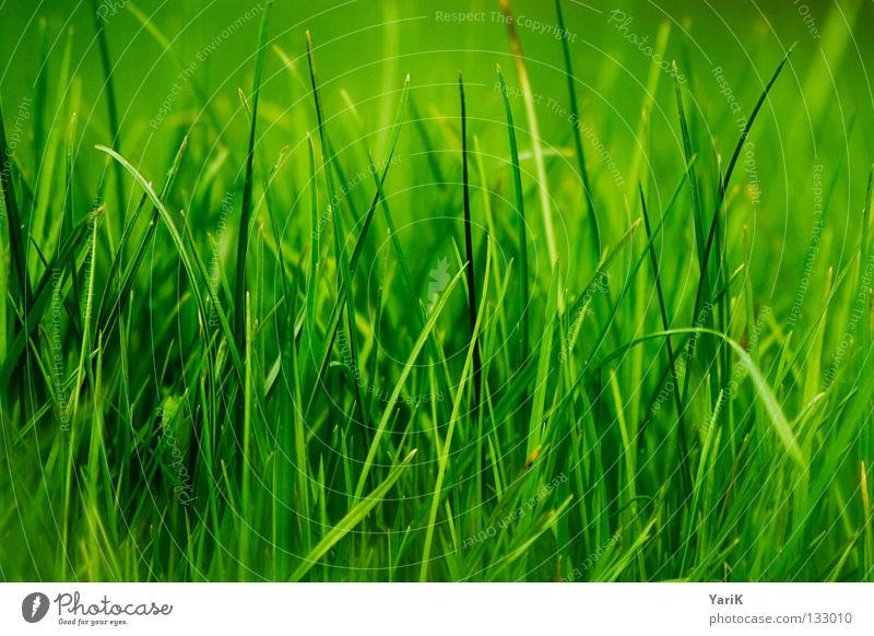 grass green Meadow Grass Blade of grass Green Grass green Dark green Bilious green Hope Spring Summer Happiness Juicy Force Plant Macro (Extreme close-up) Near