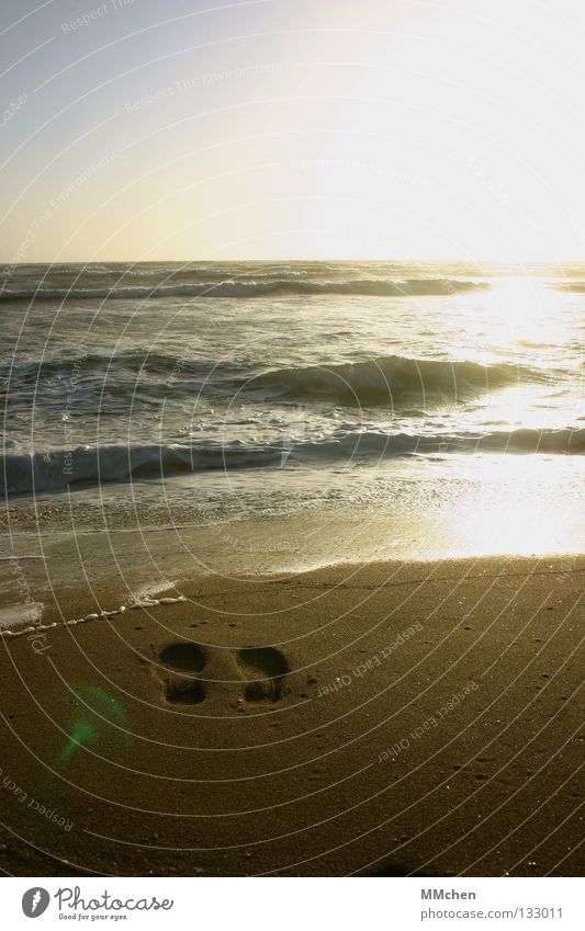 Water Sun Ocean Beach Sand Waves Horizon Tracks Longing Footprint Doomed Wanderlust High tide Hissing Low tide Rinse