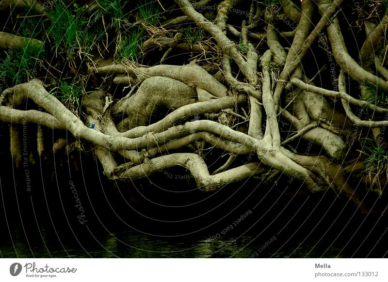 root system Environment Nature Plant Tree Root Knot Growth Dark Creepy Natural Brown Colour photo Exterior shot Deserted Day