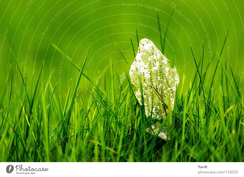Nature Green Plant Summer Joy Leaf Far-off places Meadow Death Grass Spring Happy Force Hope Happiness Energy industry
