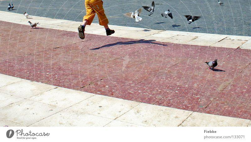 Human being Child White Joy Black Animal Boy (child) Jump Playing Freedom Gray Stone Feet Footwear Legs Bird