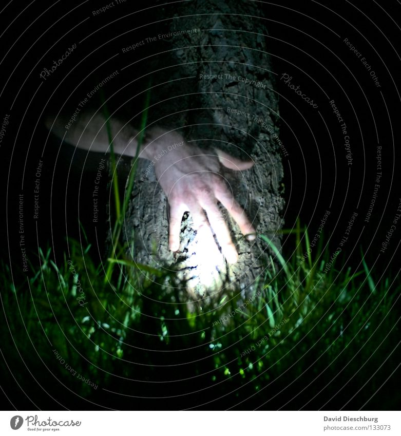 Hand alone in the forest Tree Light Grass Meadow Life Tree bark Night Long exposure Lamp Fingers Transparent Friendship Dark Black Green Creepy Horror film