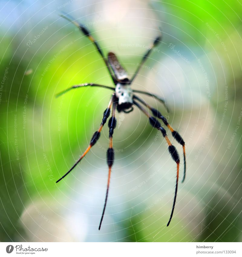 Green Animal Legs Fear Wait Dangerous Threat Observe Net Living thing Spider Panic Poison Spider's web Clearing Ambush