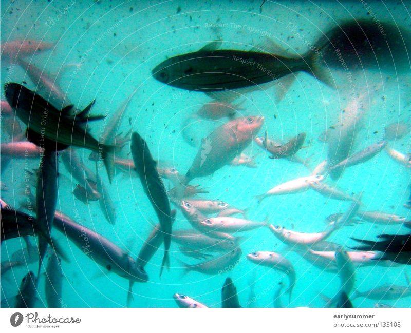 Blue Water Vacation & Travel Beautiful Sun Summer Ocean Beach Animal Nutrition Dream Island Wet Trip Fish Bathroom