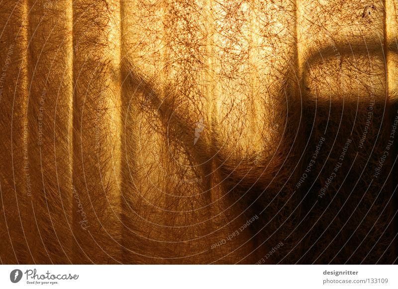 Sun Flower Plant Summer Wall (building) Garden Warmth Lighting Waves Fear Glittering Glass Electricity Physics Hot