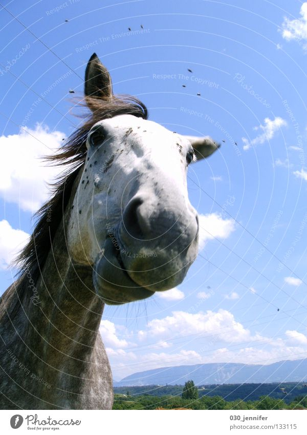 Nature Sky Blue Summer Clouds Wind Flying Horse Communicate Switzerland Trust Animal