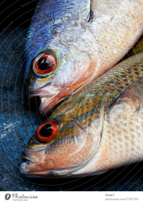 Blue Water Ocean Cold Eyes Eating Death Head Lake Pair of animals Wet Cool (slang) Fish Fishing (Angle) Bizarre