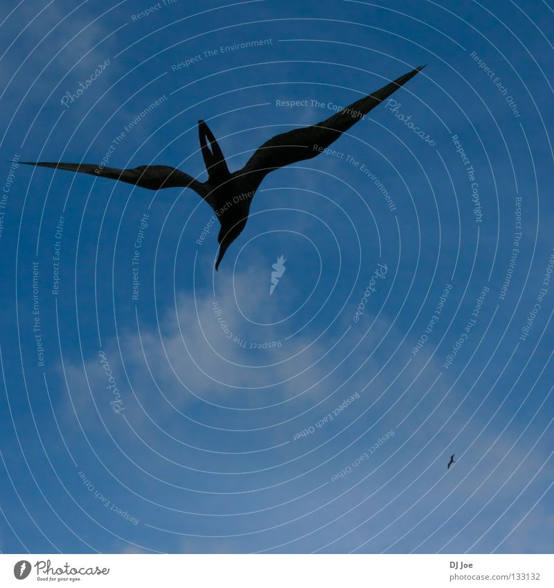 Sky Blue Air Bird Wind Flying Free Hover