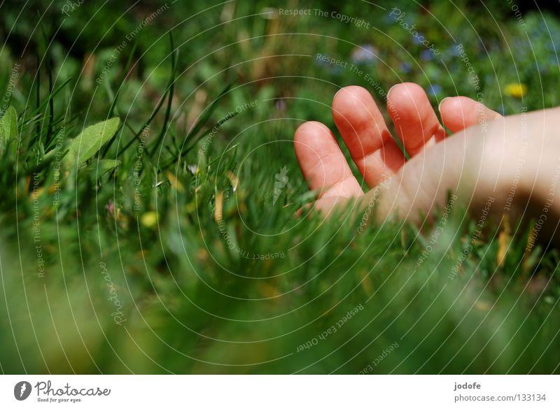 Hand Green Vacation & Travel Plant Summer Flower Calm Relaxation Meadow Grass Garden Spring Wait Lie Fresh Fingers