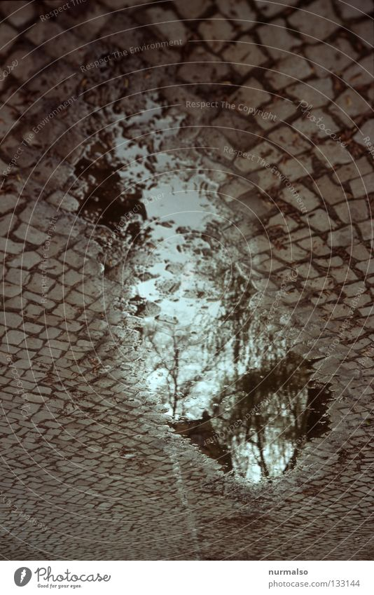 Stones in the sky Puddle Mirror Reflection Tree Under Rotate Cat's head Granite Sidewalk Stony Far-off places Thought Wall (barrier) Purloin Dark Going Potsdam