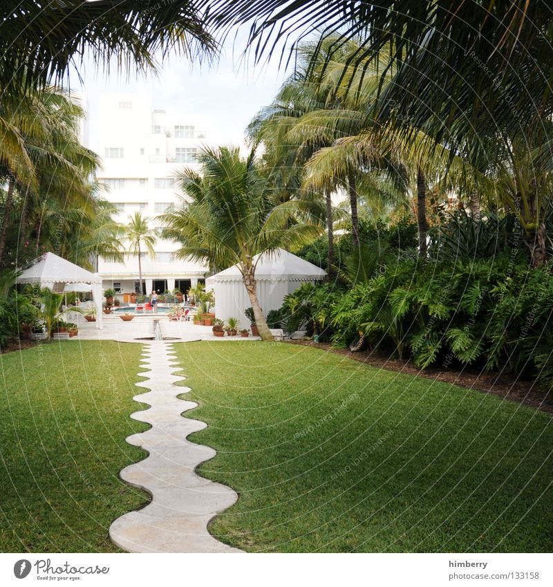 Tree Sun Plant Summer Vacation & Travel Relaxation Garden Park Coast Success USA Lawn Hotel Luxury Virgin forest Entrance