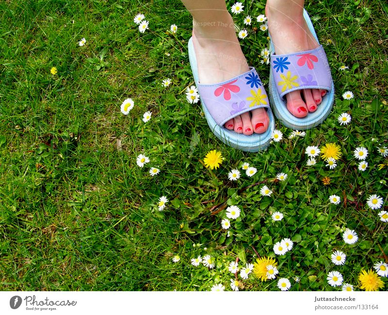 Many flowers Meadow Grass Daisy Dandelion Flower Shuffle Beach shoes Nail polish Toes Green Yellow White Violet Multicoloured Joy Spring Summer Feet Garden Lawn