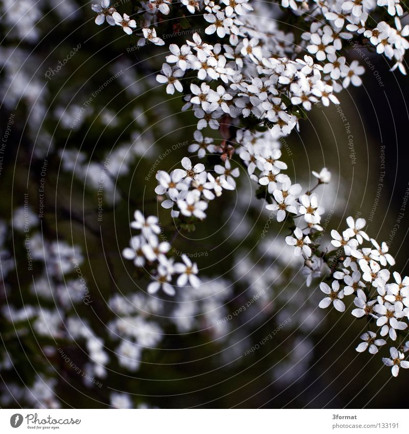 Nature Tree Plant Loneliness Blossom Spring Dream Sadness Park Warmth Rain Fog Environment Drops of water Grief Growth