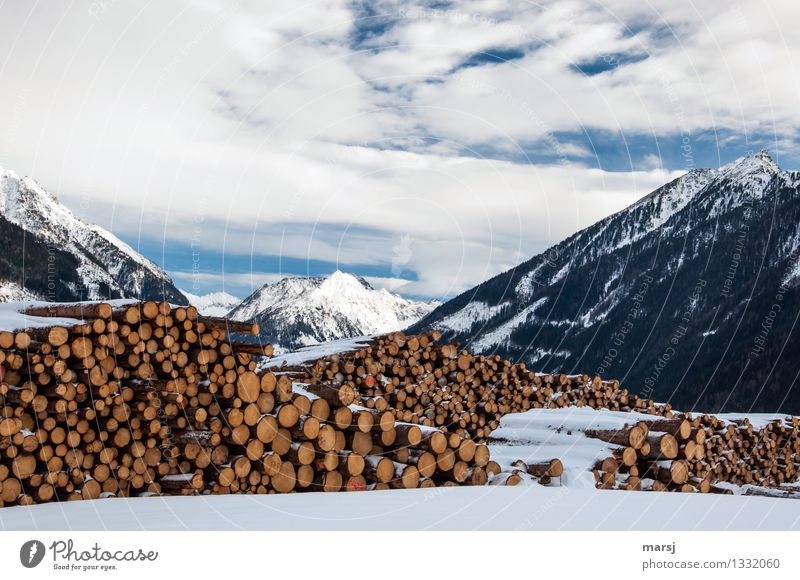 Enough wood for a cold, long winter Nature Landscape Clouds Winter Beautiful weather Snow Alps Mountain Peak Snowcapped peak Orderliness Storage Stack of wood